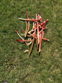 Rhubarb-Picked